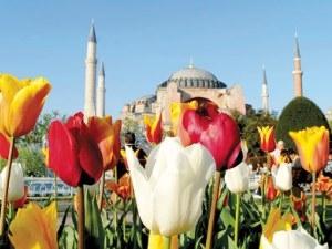 Фестиваль тюльпанов 2013 года в Стамбуле